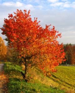 Herbst in Österreich